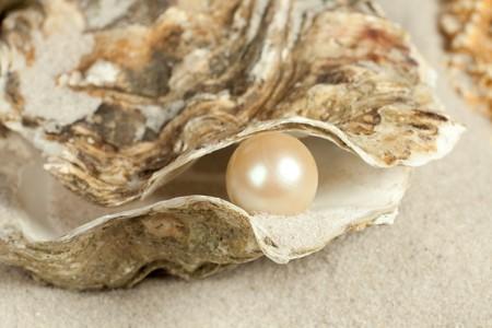 perlas: Ostra en una playa de arena con una perla grande en ella  Foto de archivo