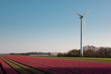 Modern windmill and springtime tulip fields in Holland photo