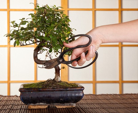 pruning scissors: Hand cutting a bonsai tree in front of a japanese shoji sliding window
