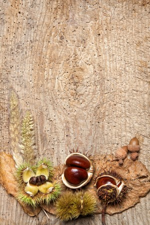 edible leaves: Decorative autumn border with chestnuts, and leaves and ample copy space Stock Photo