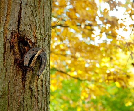 horse shoe: Rusty old horse shoe hanging on a tree in an autumn park Stock Photo