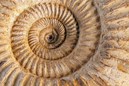 Closeup di un fossile preistorici ammonite su uno sfondo con texture in ceramica