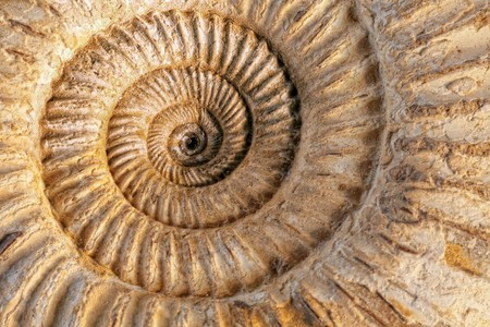Closeup of an ammonite prehistoric fossil on a ceramic textured background photo