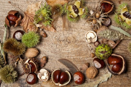 Decorative autumn border with chestnuts, walnuts, hazelnuts, acorns and leaves photo