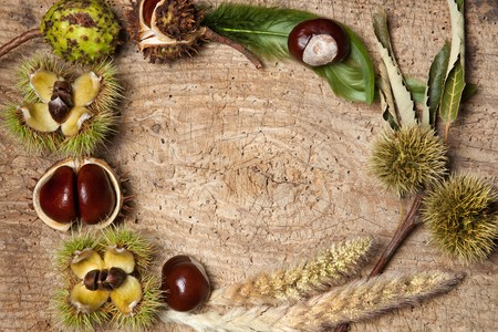 Decorative autumn border with chestnuts, and leaves Stock Photo - 7623329