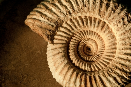 fossil: Closeup of an ammonite prehistoric fossil on a ceramic textured background