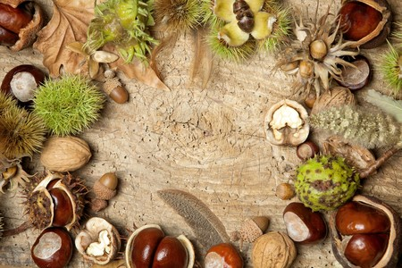 conkers: Decorative autumn border with chestnuts, walnuts, hazelnuts, acorns and leaves