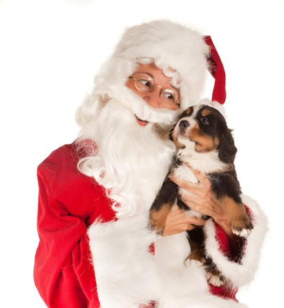 bringing: Santa claus bringing a 6 weeks old puppy dog Stock Photo