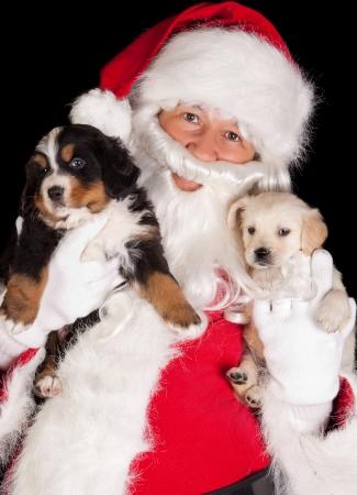 sennenhund: Santa claus bringing two 6 weeks old puppy dogs Stock Photo