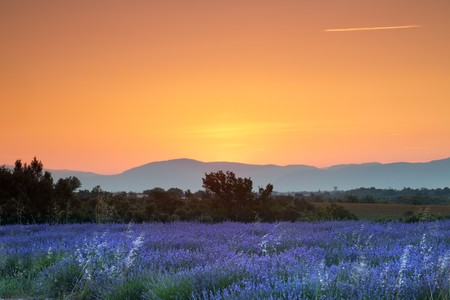 Sunrise over a summer lavender field in Provence, France photo