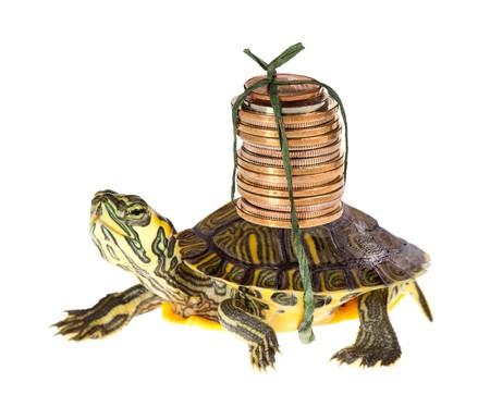 Zabawna Żółw przewożących stos oszczędność pieniędzy do banku