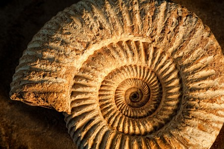 fossil: Sidelit ammonite prehistoric fossil on a ceramic textured background