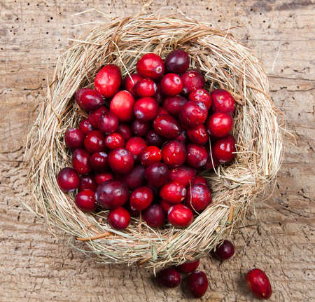 Bird's nest filled with fresh red cranberries Stock Photo - 8202051