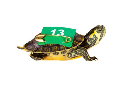 Funny turtle carrying a 13 number on his back for bad or good luck Stock Photo - 8202071