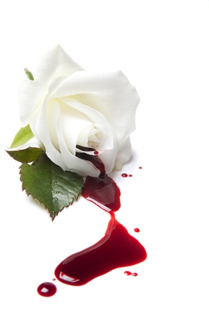 White rose with red blood flowing away