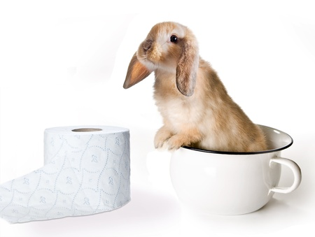 chamber pot: Adorable little easter bunny in a toilet potty