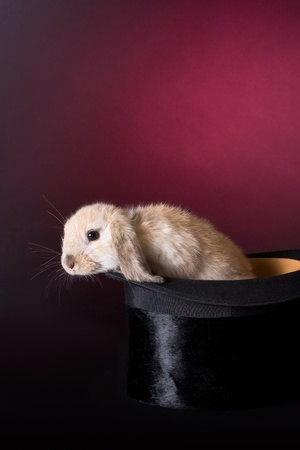 Little easter rabbit climbing out of a magicians hat photo