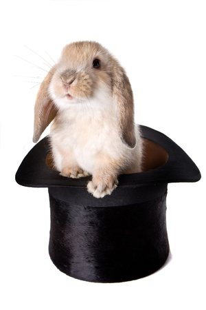 Little easter lop rabbit in a magicians hat photo