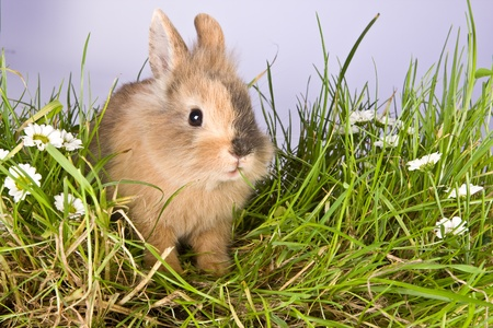 bunnie: Baby easter bunny eating grass and daisies Stock Photo