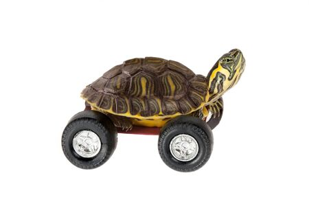 Funny little turtle using four wheels to gain speed Stock Photo - 9081744