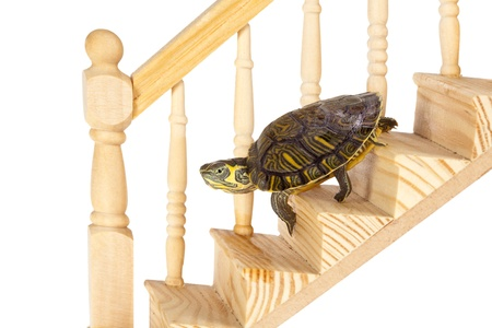 Funny turtle going down on a wooden staircase photo