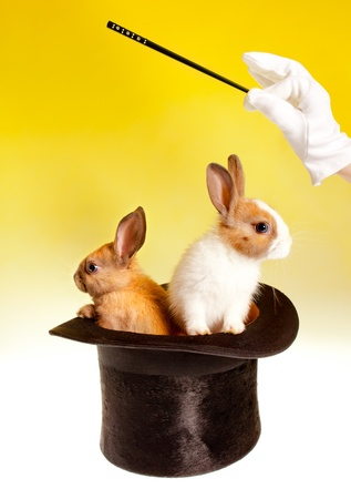Magician with magic wand with two rabbits in a top hat photo