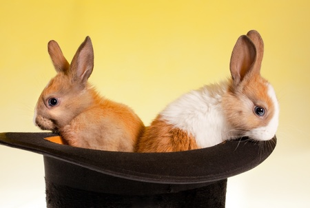 Twin baby rabbits in a magical top hat Stock Photo - 9550957
