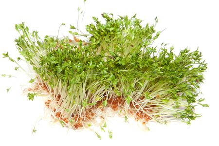 Fresh green healthy sprouts on a white background Stock Photo - 9550960