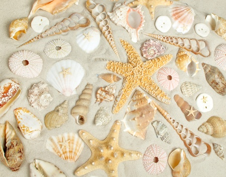 shell fish: Assorted seashells on a sandy beach filling the frame