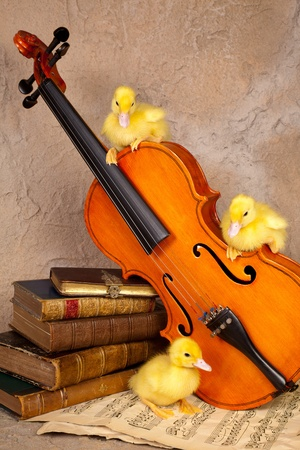 Three baby ducklings on classical music and violin photo