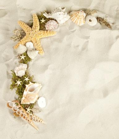 sandy: Colecci�n de conchas marinas en una playa de arena con espacio de copia