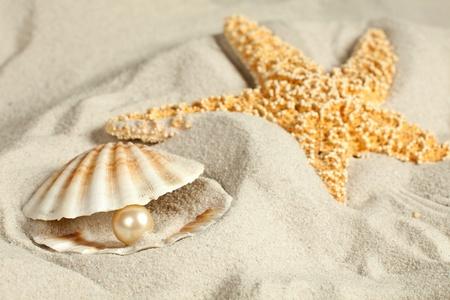 ostra: Concha en una playa de arena con una perla en ella Foto de archivo