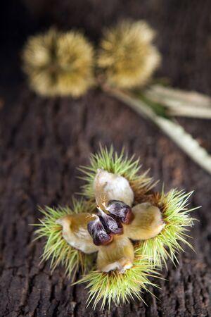 castaÑas: Bodegón con castañas sobre un tronco de árbol