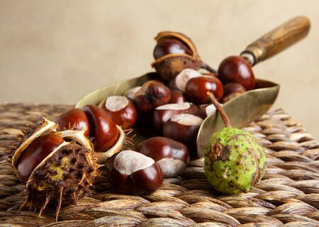 conkers: Vintage copper shovel filled with autumn chestnuts