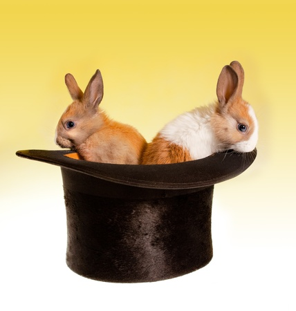 Two baby rabbits in a magical top hat photo