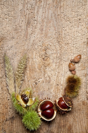 conkers: Decorative autumn border with chestnuts, and leaves Stock Photo