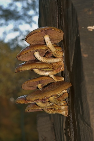 fairy toadstool: Close-up of a bunch of mushrooms growing on a tree