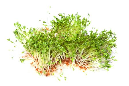 Green garden cress sprouts for a healthy diet photo