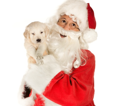 labrador christmas: Santa claus bringing a 6 weeks old golden retriever puppy Stock Photo