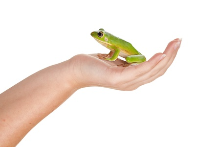 Female hand holding a beautiful green frog