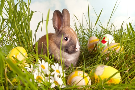 Colorful easter eggs in grass with a baby rabbit photo
