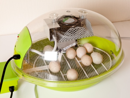 brooder: Small modern incubator for various egg sizes with turning motor and ventilation Stock Photo
