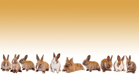 Border frame made of isolated easter bunny rabbits photo