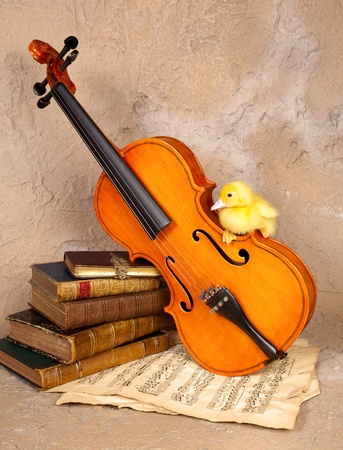 Music loving easter duckling sitting on an old fiddle photo