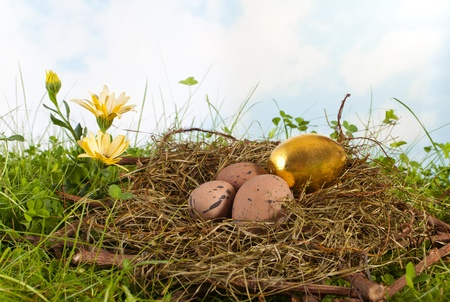 Golden easter egg in a nest with ordinary brown eggs photo