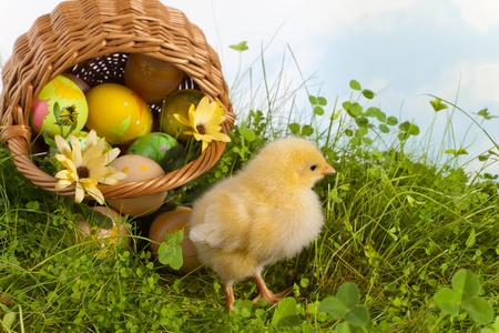 Easter chick in grass with a basket full of easter eggs