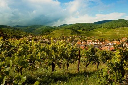 andlau: Summertime in Andlau wine village in Alsace France