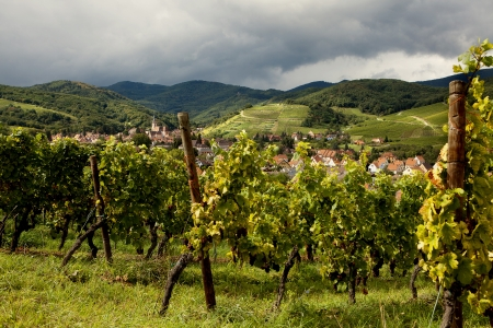 Village of Andlau in Alsace France with foreground vineyards photo