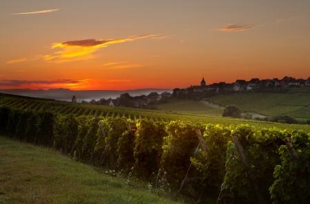 bodegas: Verano de la salida del sol por la mañana en la región francesa de Alsacia viñedo Foto de archivo
