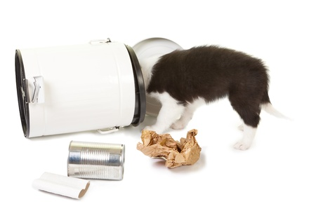 garbage can: Naughty 5 weeks old puppy playing in the garbage can